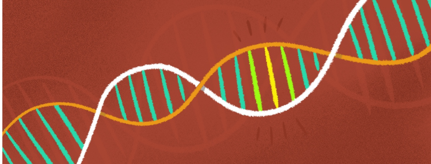 double helix with highlighted bands showing genetic mutation