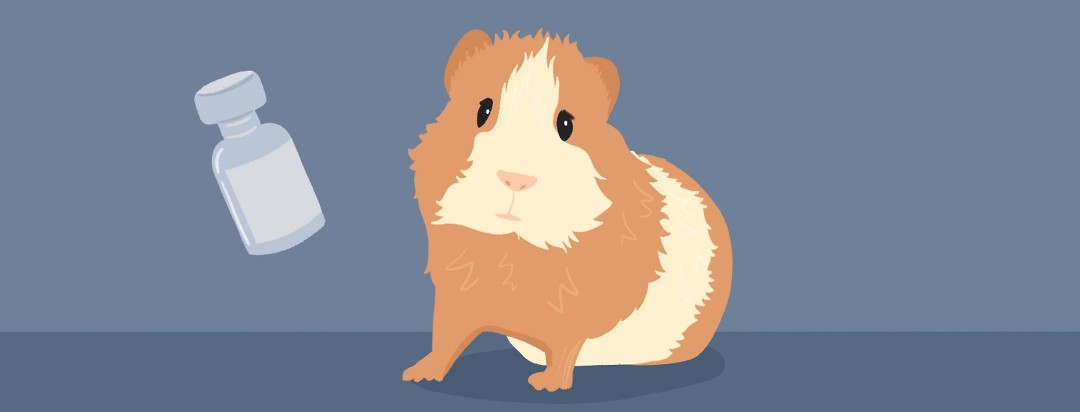 A guinea pig next to a bottle of injectable medication